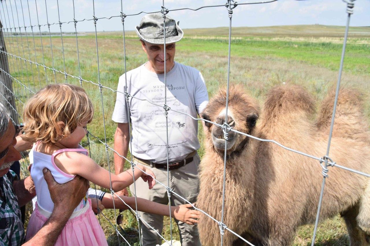 Александр Чибилёв знакомит посетителей с верблюжонком Карагуль