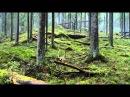 смотреть фильм Чудесный лес онлайн, полностью бесплатно в hd качестве — Яндекс Видео 3