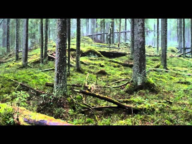 Чудесный лес (2012) — Metsän tarina