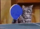 Ultimate Ping Pong Cats