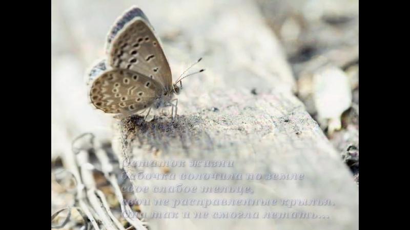 Урок бабочки. Притча. » Freewka.com - Смотреть онлайн в хорощем качестве
