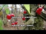 Ой цветет калина -Народная (КАРАОКЕ)