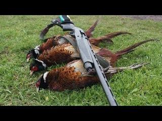 Удачная охота на фазана с легавыми. Охота на зайца осенью. Видео отчет и веселые байки про охоту.