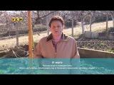 Укроп (6 соток) #сад, #огород, #дача