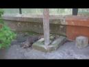 котик и голубь
