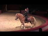 Haflinger zeigt Piaffe & Passage bei Fachtagung 2015 Anja Beran & Jana Mandana