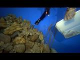 Кормление акул Галактика Когалым
