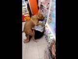 Похотливая собака в 7-eleven Таиланд
