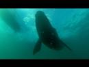BBC Морские гиганты Жизнь гигантов 2011 HD 720