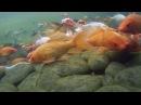 Подводный мир Фельдман Экопарк