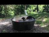 Медведь по имени купается в ванне