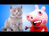 Мультфильмы для детей про Животных Мультик котики для девочек Котенок Пушок и Маленький зоомагазин