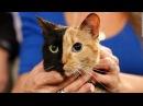 Самые необычные животные в мире видео The most unusual animals in the video world