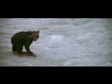 История о стойкости и надежде из легендарного фильма «Медведь».