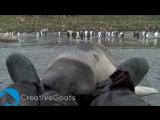 Детеныш тюленя впервые встретил человека