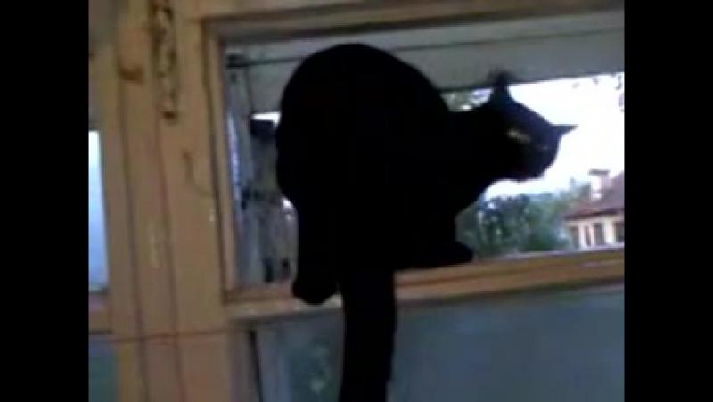 Кот облаивает соседей