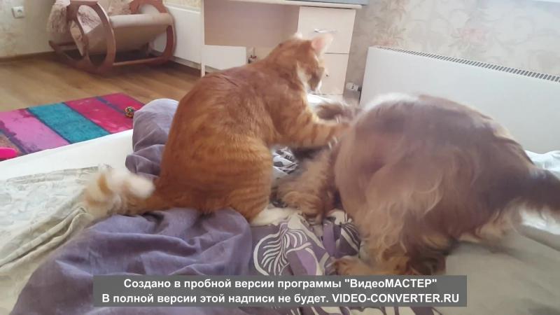 кот борцуха VS собака атаковака