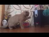 Кот и сабвуфер