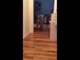 ,как пес идет по коридору,чтобы не разбудить кота,спящего в коробке за дверью.Вы когда-нибудь видели собаку идущую на цыпочках?!