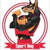 Sport Dog. Хендлинг зал. Дрессировка. Петергоф.