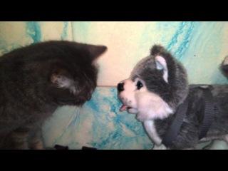 Кошка лижет у собаки