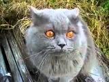 демон кот говорит открой глаза