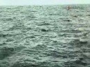 Люди и дельфины (1983) 4-я серия из 4-х.
