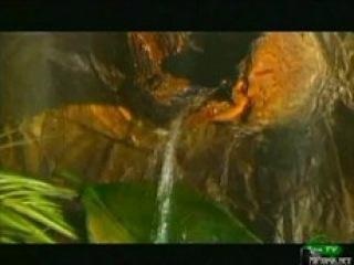 BBC: Мир природы. Львы в опасности