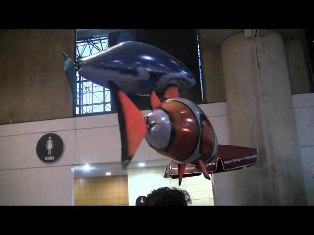 Летающие рыбы Акула и Рыба клоун