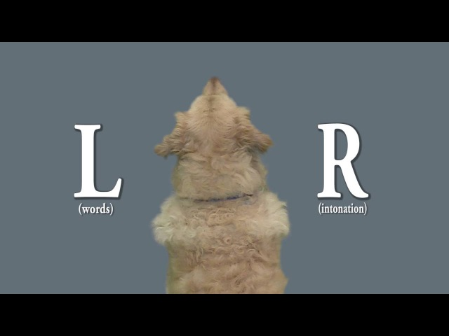 How dog brains process speech (Andics et al., Science, 2016)