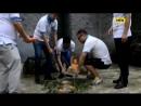 У Китаї помер найстаріший у світі самець панди