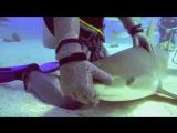 MEN EATING SHARK - Madison Stewart Production