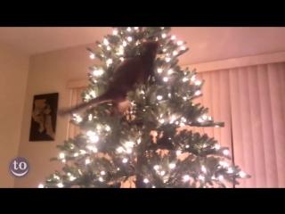 Кошки и новогодние елки!!!