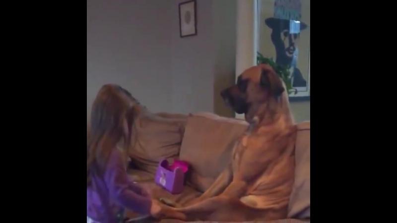 Ангельське терпіння в собаки