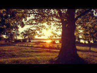 Relaxing Piano Music Most Wonderful and Beautiful music Long Playlist Peaceful Piano