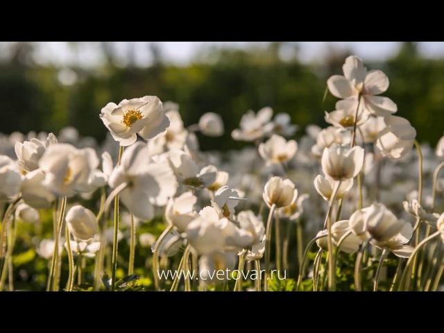 Сады Botanicus, натуральная косметика