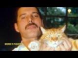 Фредди Меркьюри The Show Must Go On! Freddie Mercury .....