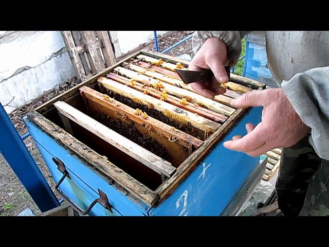 БЫСТРОЕ РАСШИРЕНИЕ ПАСЕКИ Формирование отводков пчел Весенние работы на пасеке