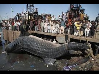 Real Dinosaurs Caught on Tape Real Dinosaurs found Alive Dinosaur Pictures Real Dinosaur Video 2016