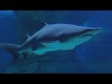 Океанариум в Москве. The Oceanarium in Moscow. МОСКВАРИУМ.  Aquarium. 水族館. Le seaquarium