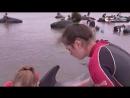 Волонтеры поливали водой выбросившихся на берег дельфинов
