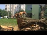 Движение - это жизнь. Cпортивный бигль Чили.The life is motion. Beagle Chili is a real sport dog