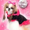 dog_style_perm