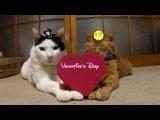 котовалентины) Valentine's Day.