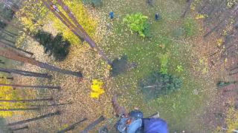 Удаление аварийного дерева, валка по частям