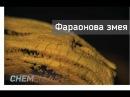 Фараонова змея. Термическое разложение роданида ртути.
