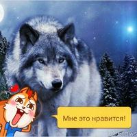 Анкета Николай Белов