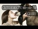 ЗОО эротия наступает на славян (Скотоложество)
