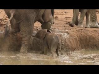 Спасение слоненка