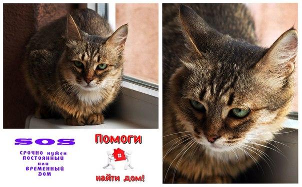 Котик и кошечка ищут постоянный или временный дом и любящих хозяев. Ко